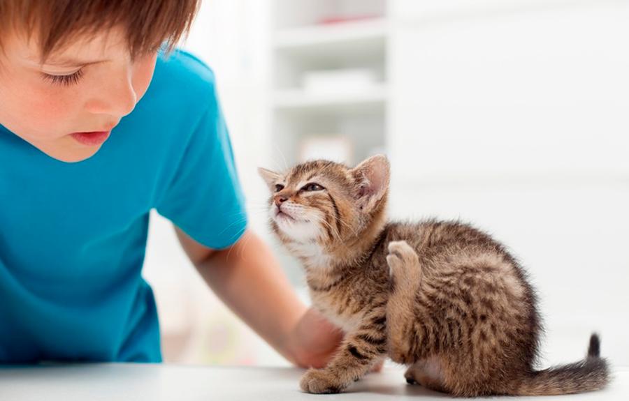 вывести блох у кошки с котятами