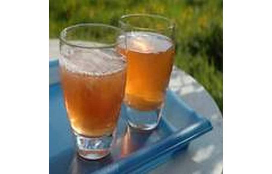 Чайный гриб, полезные свойства, противопоказания, уход