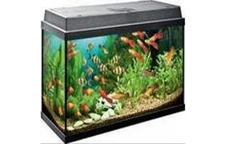 Правила размещения аквариума