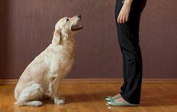 Обучаем собаку выполнению основных команд