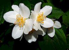 Как привлечь любовь с помощью растений