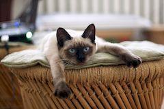 Кастрация кота - послеоперационный уход